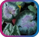 продам семена экзотических растений - Страница 3 522a6441a9fd
