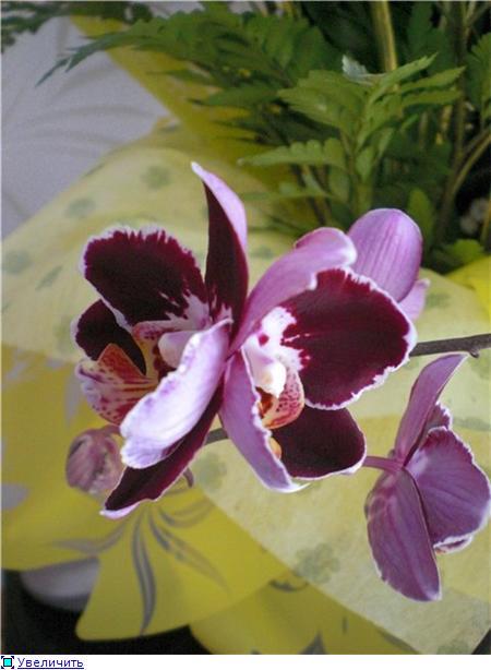 Странности и интересности наших орхидей - Страница 6 E6b6ace4cd80t