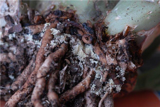 Что это - грибы, яйца или плесень??? Da2ef3611bce