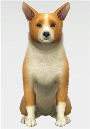 Собаки - Страница 4 A8bc68228fdc