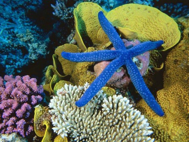 Морская звезда 355c90d07b29