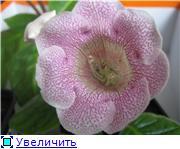 Семена глоксиний и стрептокарпусов почтой - Страница 7 5991808b3825t