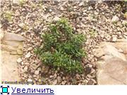 Cад Людмилы Ивановой из черкасс 1b283bbe0493t