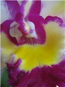 Странности и интересности наших орхидей - Страница 7 3586cea1bf61t