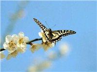 Цветы и бабочки 10bba0976aed