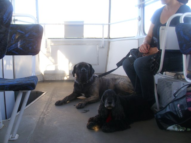 Собаки Татьяны Моисеенковой, кот Мензурка - Страница 7 B5b85776e0aa
