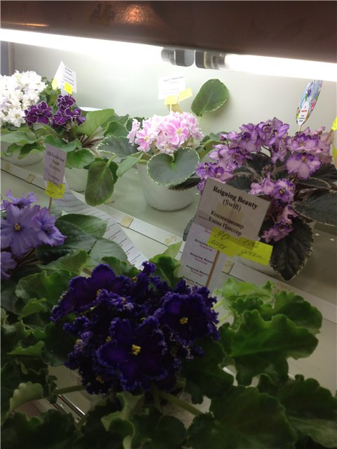 Выставка цветов D57cac115a72