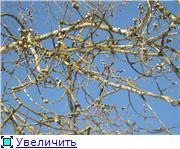 """Фотоконкурс """"Весна идет!"""" Fa16f844ad90t"""