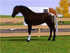 Лошади - Страница 4 D5acfaf1db9f