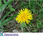 "Фотоконкурс ""Весна идет!"" 1703cc4a345ft"