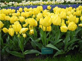 Рай тюльпанов или Кёкнхов - 2012 260858ee94d1t