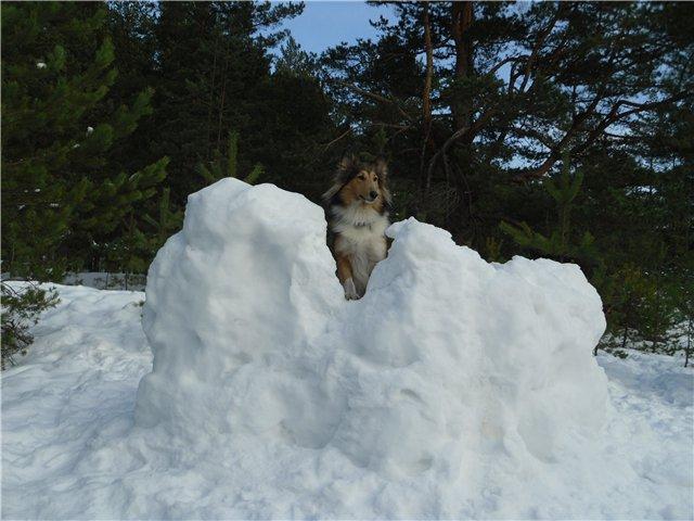 Зимние забавы 0546b75166b7