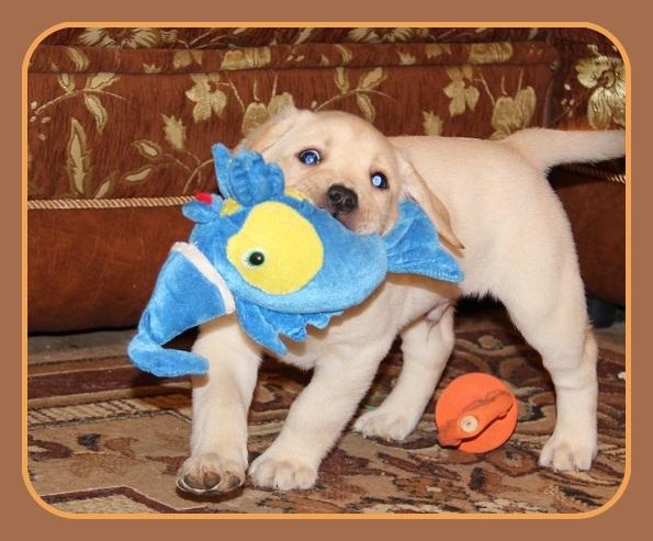 "Питомник ""Прима Персона"". Мои собаки-моя жизнь! - Страница 2 46610bbb6340"