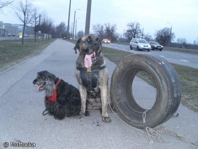 Собаки Татьяны Моисеенковой, кот Мензурка - Страница 3 2364d54e3758