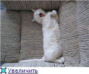 Наши любимые животные - Страница 3 397591851d58t