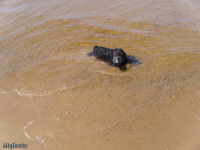 Собаки Татьяны Моисеенковой, кот Мензурка - Страница 4 3fb8dcc1ab68