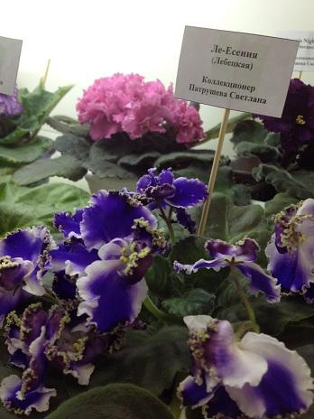 Выставка цветов - Страница 2 7983d1143165