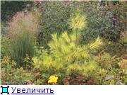 Cад Людмилы Ивановой из черкасс Fd363349a420t