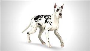 Собаки - Страница 7 2ded40e46846