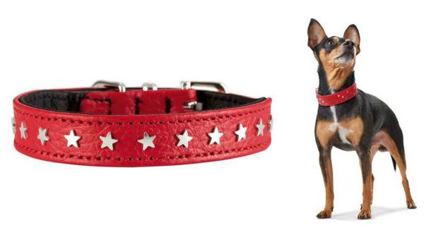 Интернет-зоомагазин Red Dog: только качественные товары для  - Страница 11 0411a1eb3a32