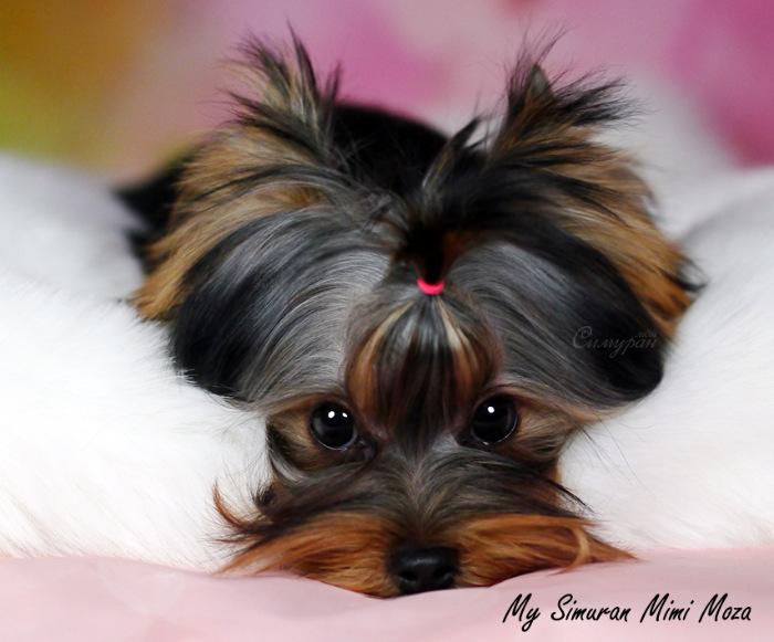 My Simuran Mimi Moza (Маруся) 579a5bb625ba