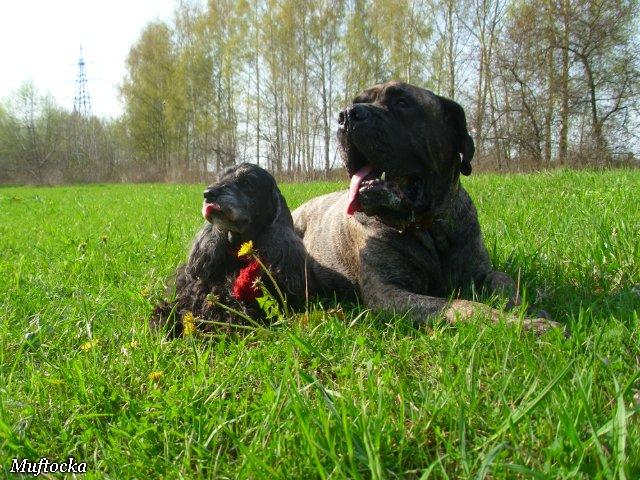 Собаки Татьяны Моисеенковой, кот Мензурка - Страница 4 Aff3718ec49e