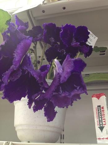 Выставка цветов - Страница 2 B1c07d102693