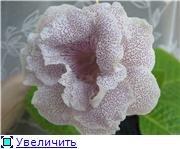 Семена глоксиний и стрептокарпусов почтой - Страница 10 21167a9a5bae