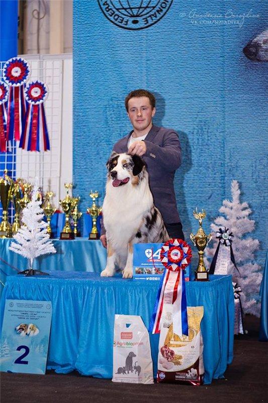 Выставочные успехи наших собак - 5 - Страница 30 A2cba67ba3ca