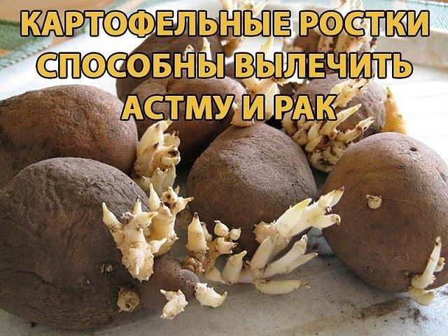 Картофельные ростки способны вылечить астму и рак  790ede1fcc8b