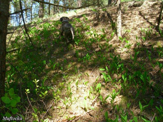 Собаки Татьяны Моисеенковой, кот Мензурка - Страница 4 749db65bb75c