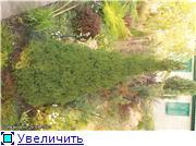 Cад Людмилы Ивановой из черкасс 080e618896c7t