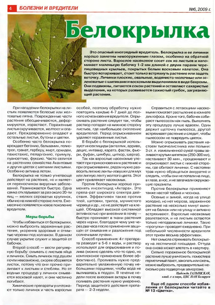 вредители комнатных растений D473b4d3a6d4