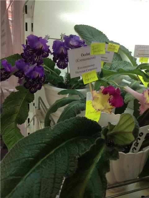 Выставка цветов 0cc99810a57e