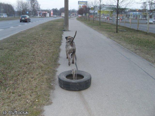 Собаки Татьяны Моисеенковой, кот Мензурка - Страница 3 Ab302bcd8d02