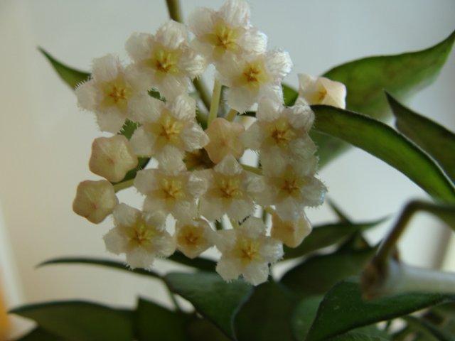 Мои цветочки - Страница 39 F0916170952b