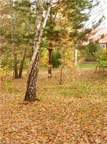 Осень, осень ... как ты хороша...( наше фотонастроение) - Страница 6 F784ed543394