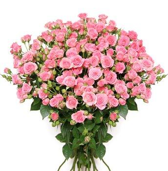Поздравляем с Днем Рождения Миланочку (МилаМ) A14b964dea02t