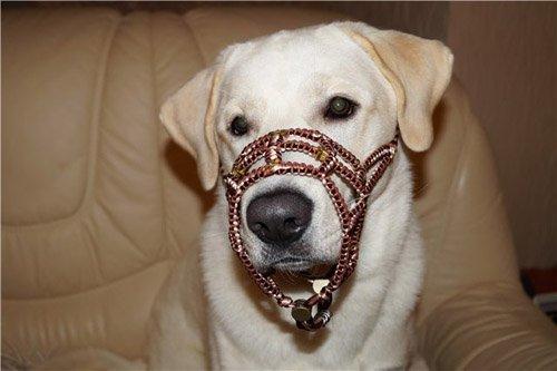 Magic Charm - ошейники, обереги, украшения и аксессуары для собак B5ba7dd03b5f