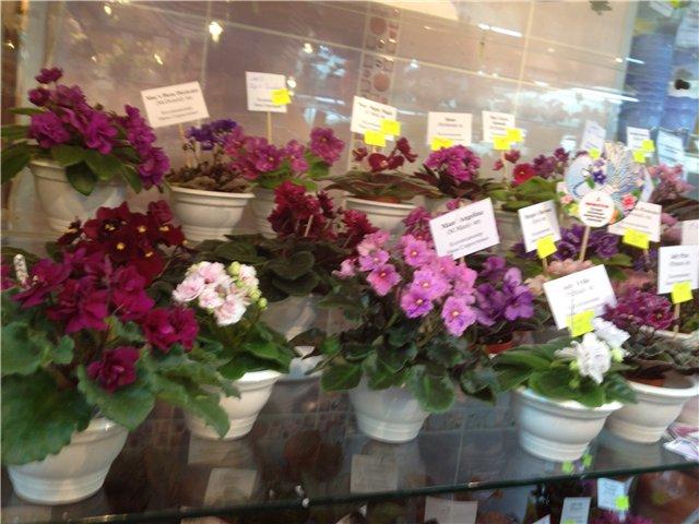 Выставка цветов 700dde5a1117