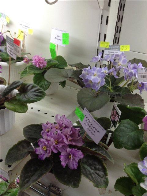 Выставка цветов B699404a2f22