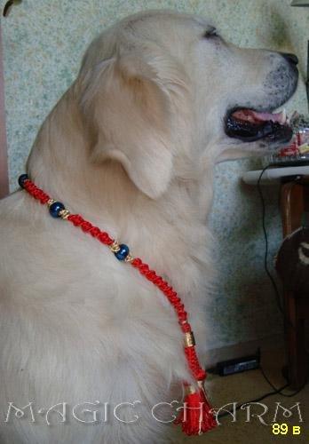 Magic Charm - ошейники, поводки, ринговки, вязаная одежда и другие аксессуары для собак 6bc812ebf36d