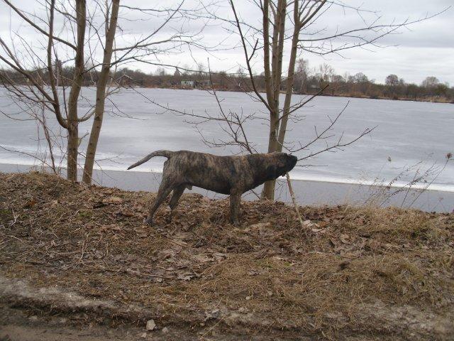 Собаки Татьяны Моисеенковой, кот Мензурка - Страница 3 51413f65dd77