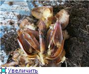 Тестирование лилий 2012 - Страница 6 10bf34711d74t