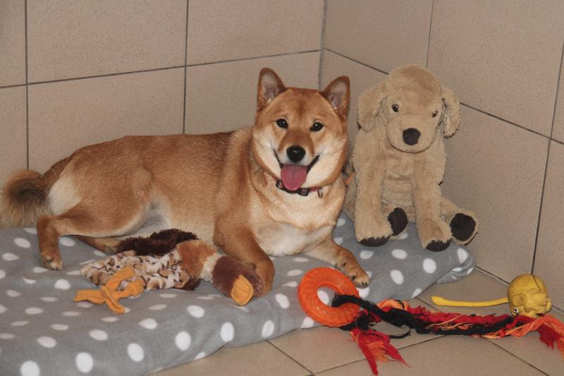 Семейная гостиница для собак в Дедовске (передержка) B7a309ec591e