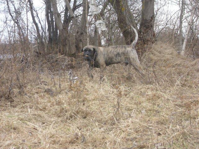 Собаки Татьяны Моисеенковой, кот Мензурка - Страница 3 Af8c3c38dc0f