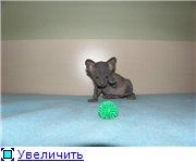 Донские сфинксы 6e87628e5ba6t