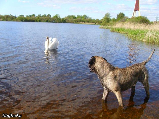 Собаки Татьяны Моисеенковой, кот Мензурка - Страница 4 53020410139f
