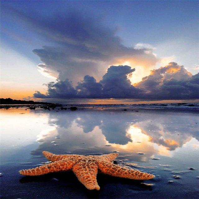 Морская звезда 383b29f59e32