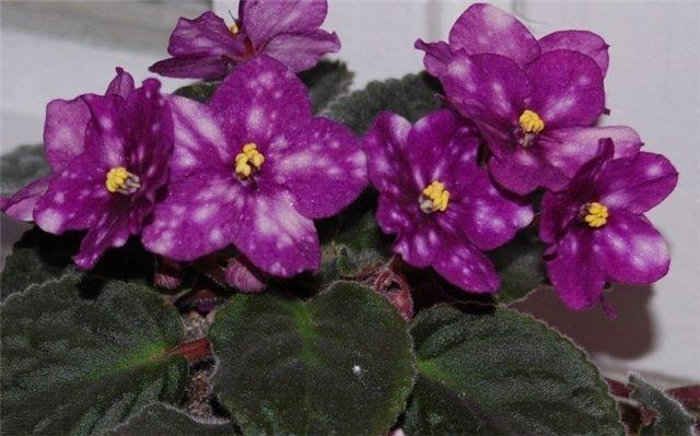Продам, общие объявления по продаже растений C2598e7233fc